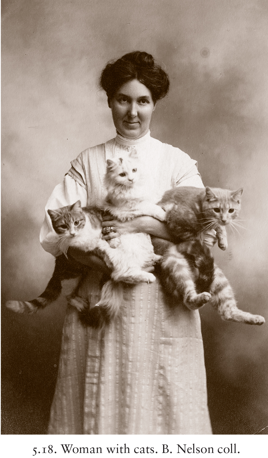 eye candy friday cats through the ages